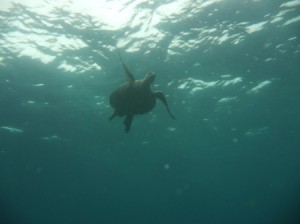 A turtle from below