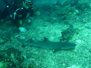 My buddy Jo with a reef shark at Sipadan