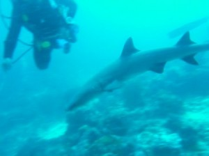 Us diving with sharks